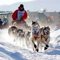 Go Dog-Sled Racing in Alaska